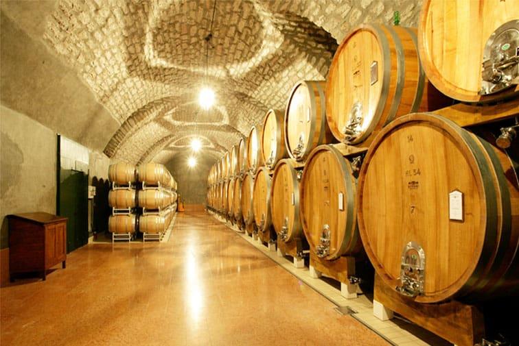 Degustazioni in Cantina a Rimini: Vino e Prodotti Biologici Tipici